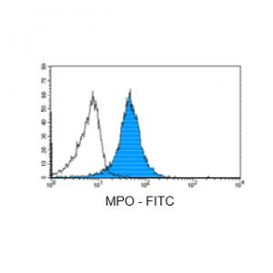 Figure 5: Immunostaining with Nordic-MUbio anti MPO-FITC conjugate of undifferentiated leukemia cells of AML type.