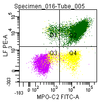 Figure 7: Double labeling of a normal blood sample treated with GAS-002, and immunostained for Lactoferrin (PE) and MPO-C2 (FITC).