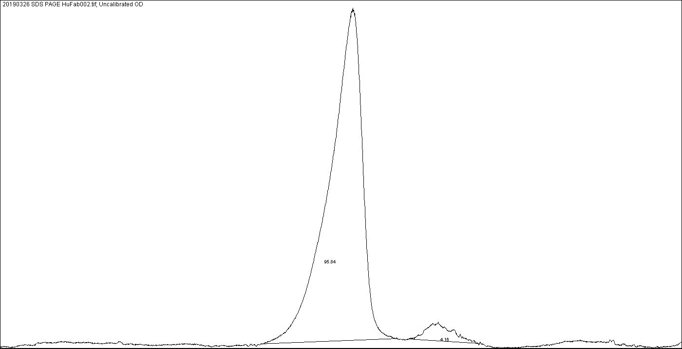 Image J scan of a non-reducing SDS-PAGE for the Fab fragment of human IgG showing >95% purity